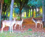 la_citta_della_domenica_animali