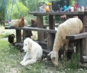 podere_morgana-animali-insieme