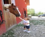 podere_morgana_cavalli