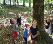 orme_nel_parco-scoperta-bosco