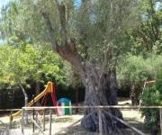 agriturismo-i-cedri-area-giochi