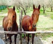 agriturismo-i-cedri-cavalli
