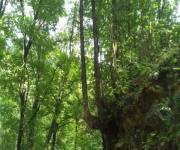 valle-del-lao-fiume-argentino