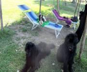 agriturismo_casale_martignano_spiaggia_cani
