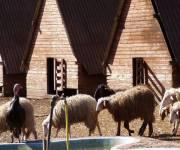 iacchelli_recinto_pecore