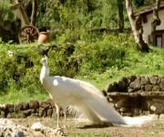agriturismo_la_cerra_pavone_albino