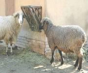 bioparco-roma_fattoria