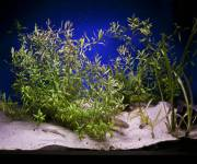 acquario_di_bolsena-vasca