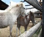casale_pantano_animali_cavalli