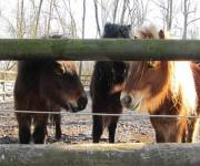 parco_ittico_paradiso_pony