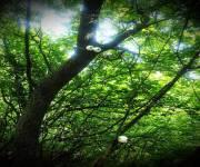 parco_bosco_delle_meraviglie_sorprese