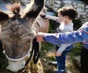 villaggio_cala-molinella-fattoria-didattica