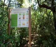 parco_naturale_bosco_delle_pianelle_boschi