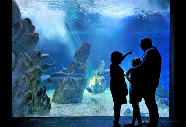 Acquario di cala gonone sul golfo di orosei con i for Acquario aperto
