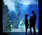 acquario-cala-gonone-mare-aperto