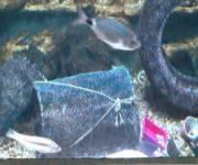 acquario-cala-gonone-vasca-del-mare-inquinato