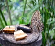 casa-delle-farfalle-monteserra-da-vicino