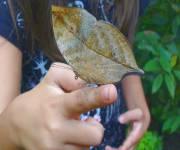 casa-delle-farfalle-monteserra-incontri