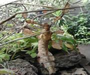 casa-delle-farfalle-monteserra-insetto-stecco