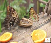 casa-delle-farfalle-monteserra-serra-pasto