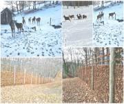 parco-faunistico-ranco-spinoso-stagioni