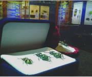 esapolis-esposizione-scarabei
