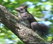 cascate-del-verde-animali-del-bosco