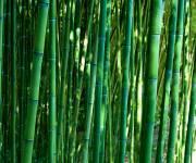 labirinto-franco-maria-ricci-bamb