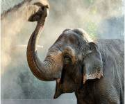 bioparco-roma_elefanti
