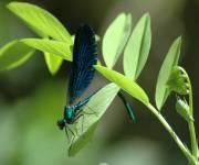 acquario_di_bolsena-insetti