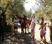 agriturismo_le_vigne_con_i_cavalli