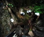 parco_bosco_delle_meraviglie_occhi