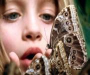 casa-delle-farfalle-monteserra-serra-vicini